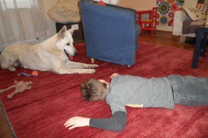"""Therapiehund """"Professor"""" Amadeus beim geduldigen Spiel mit einem Kind"""